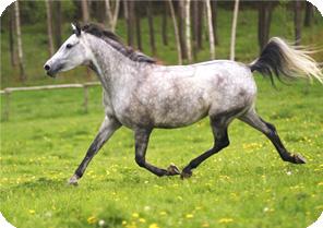 magen müsli pferd