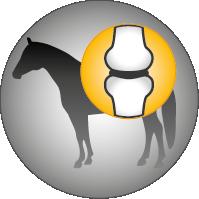 Josera-Pferdefutter-Fohlen-Stute-Knochen-Gelenke