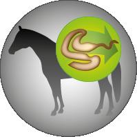 Josera-Pferdefutter-Mash-Rapid-Leicht-verdaulich