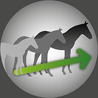 Josera-Pferdefutter-Fohlen-Stute-Fell-Huf