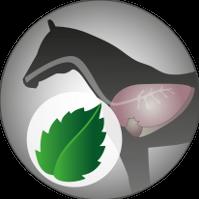 Josera-Pferdefutter-Freizeit-Aktiv-Pfefferminzoel
