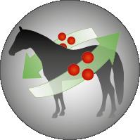 Josera-Pferdefutter-Senior-Stoffwechsel-aktivierend