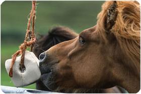 JOSERA-Pferdefutter-Spezialprodukte-Mineralien-Vitamine